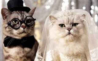 Поздравления с годовщиной мужу от жены. Поздравления мужу на свадьбу