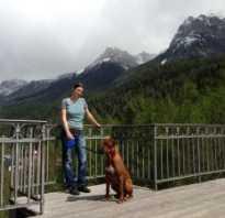 В Европу с собакой на машине — мой опыт