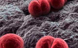 Бактерии под микроскопом. Микробы под микроскопом. Фото