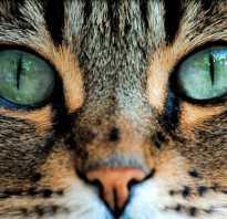 Интересные факты о том, как кошки видят. Какими нас видят кошки
