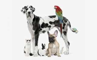 Пет — терапия: лечение животными. Пет-терапия: как животные нас лечат