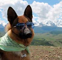 Вывоз собаки. С собакой за границу