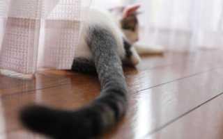 Почему коты виляют хвостом. Как понять кошачий язык