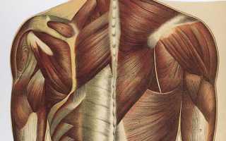 Укрепление мышц спины и шеи. Наблюдаем за движущейся игрушкой