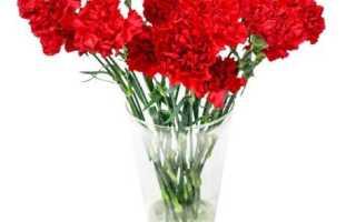 Цветы в память усопшим. Какие цветы покупают на похороны мужчине и женщине