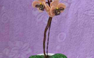 Фаленопсис из бисера. «Orchid Bead» Орхидея из бисера