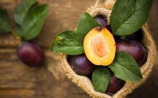 Полезные и вредные фрукты при беременности. Можно ли беременным сливы