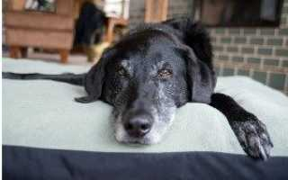Почему у собаки шерсть. С чем связано выпадение шерсти у собак