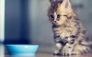 Рацион питания маленьких котят. Рацион котенка