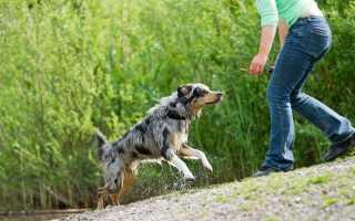 Как научить собаку команде «Ко мне! Обучаем собаку команде ко мне