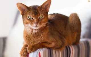 Самые красивые кошки в мире. Фото и видео котят