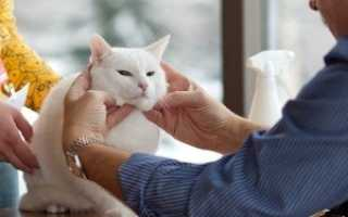 Уход за кошкой. Уход за домашними кошками