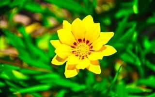 Народная примета «Желтые цветы