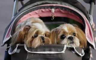 Как вывезти собаку за границу на машине. С собакой за границу