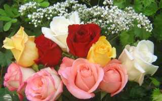 Букет красных роз большой красивый. Самые красивые букеты цветов и не только