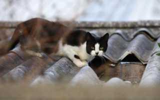Как отучить чужих кошек от своего участка. Как защитить участок от кошек