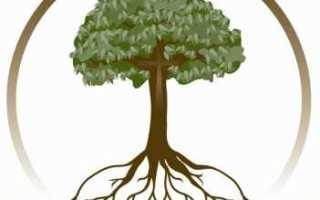 Как сделать родовое дерево на компьютере. Как сделать генеалогическое дерево