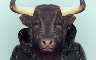 Как удержать мужчину быка. Идеальная пара для быка