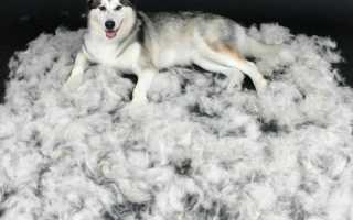 Почему собака плохо линяет. Что делать во время линьки у собаки