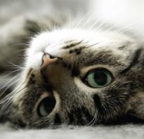 Как узнать что кот любит вас. Любят ли кошки своих хозяев