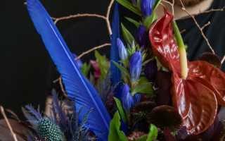 Какие цветы дарить мужчине в июне. Какие цветы дарят мужчинам