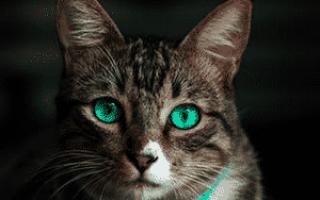 Кровянистые выделения у кошки после течки. Выделения из петли у кошек
