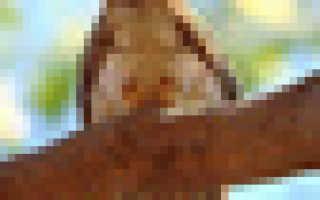 Каракульча — шкурки от неродившихся ягнят. Как делают шубы из каракуля