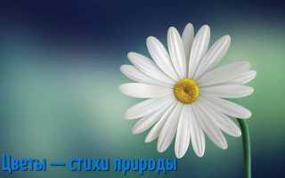 Цитаты о цветах. Цитаты и афоризмы о цветах