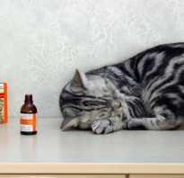 Почему кошки любят валерьянку. Почему все кошки любят валерьянку