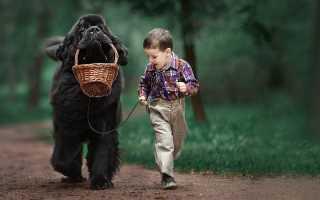 Породы собак для детей. Собака для ребенка. Лучшие породы собак для детей